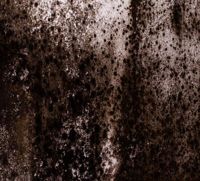Webb Law Group black mold Lincoln Housing